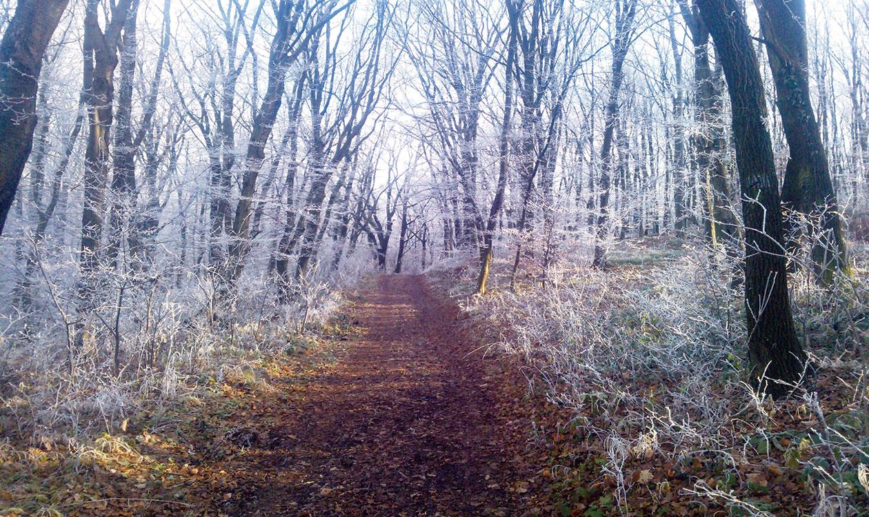 Irány a téli természet!