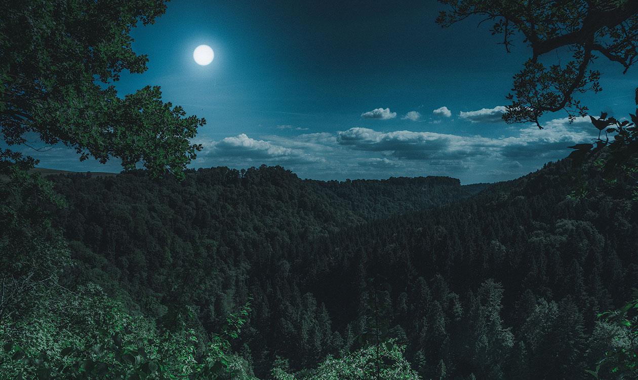 Irány az éjszakai erdő!