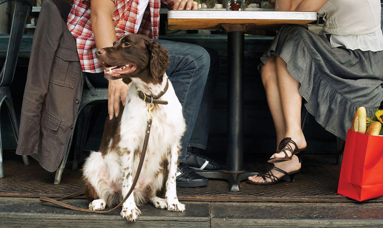 Kutyabarát éttermek – étterembarát kutyák