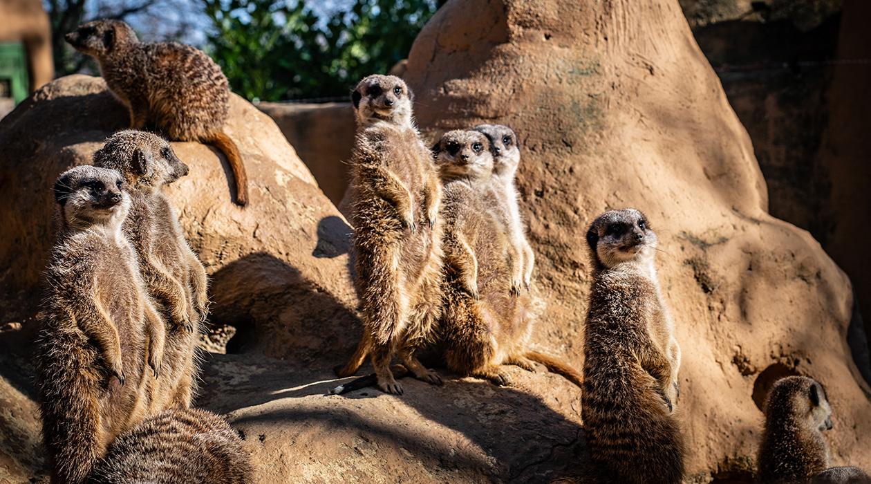 Tavaszi munkálatok az Állatkertben