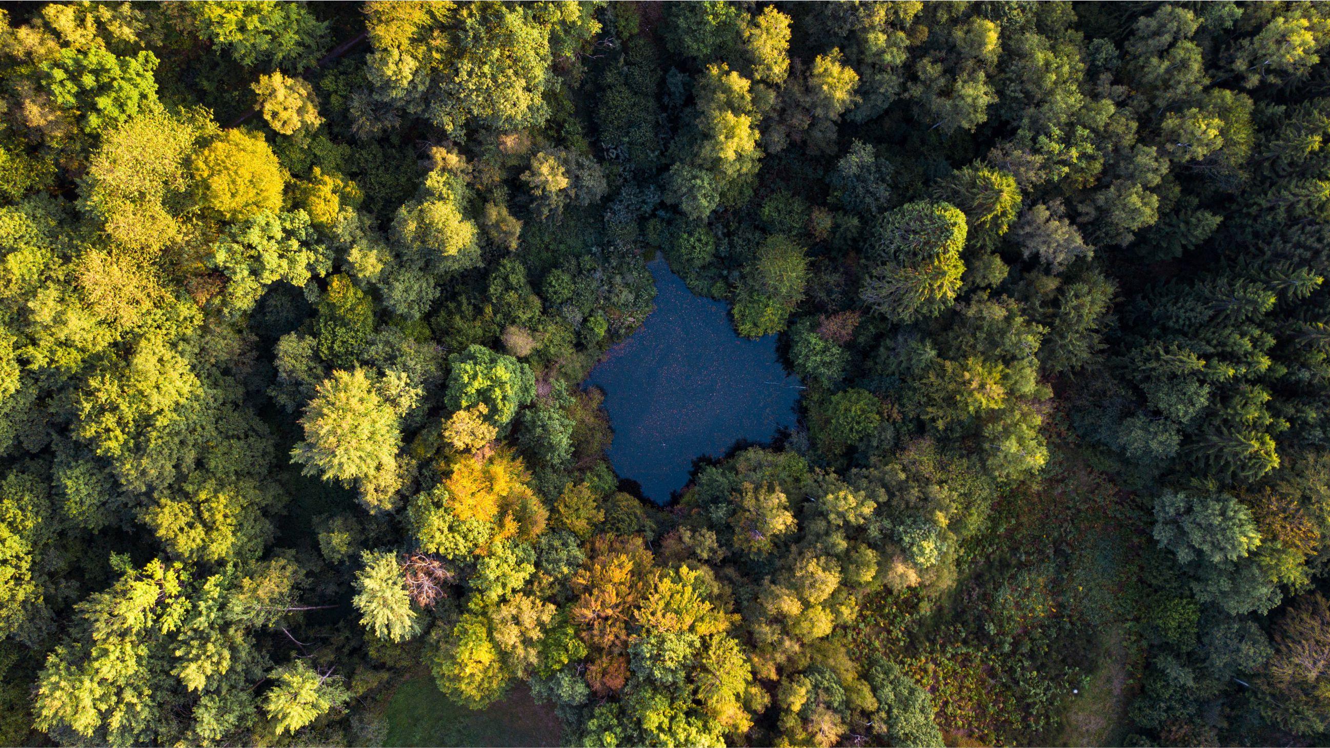 Zöld Pécs: Az éltető víz és az erdők